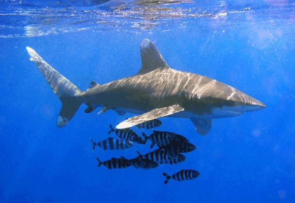 Las cuotas de caza y pesca son solo un síntoma: el problema es el especismo