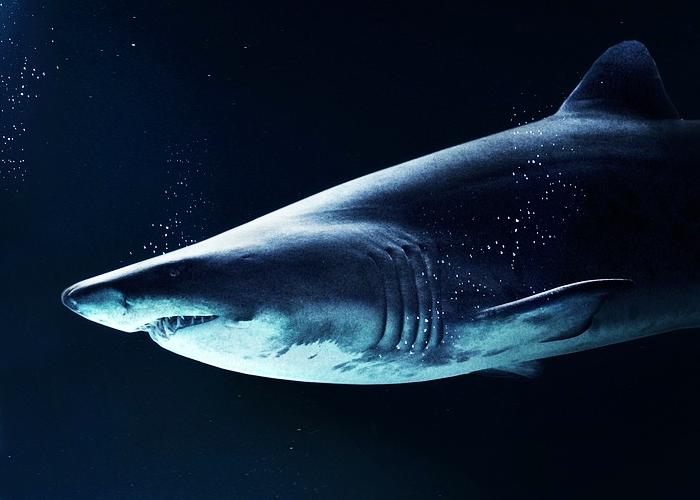 La apresurada prohibición de la pesca del tiburón