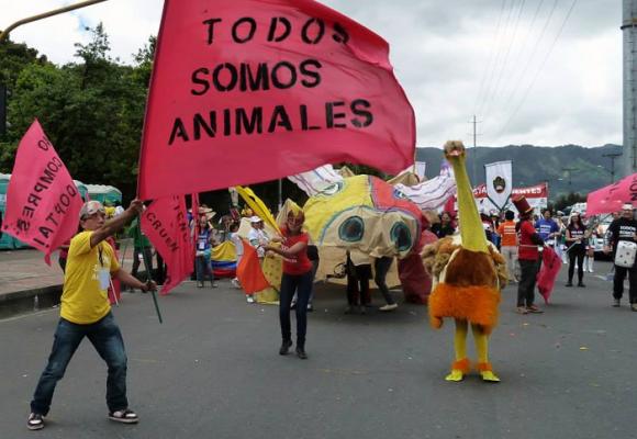 Animalistas, una fuerza política que se fortalece