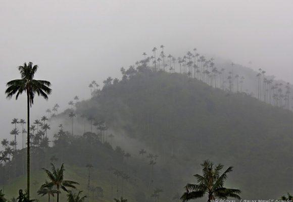 Viajando por Cocora, una maravilla en el centro de Colombia