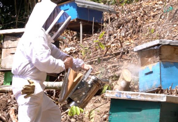Apicultura, un dulce negocio para las familias campesinas