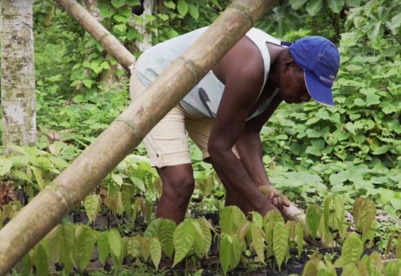 Los campesinos de Tumaco que le apuestan a la sustitución de cultivos