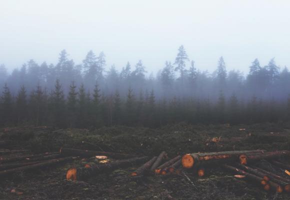 La preocupante depredación de bosques y montañas