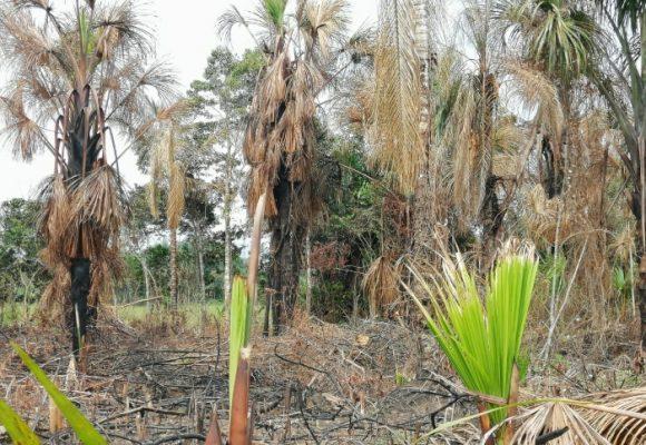 Escándalo por el humedal de Belén de los Andaquíes, Caquetá