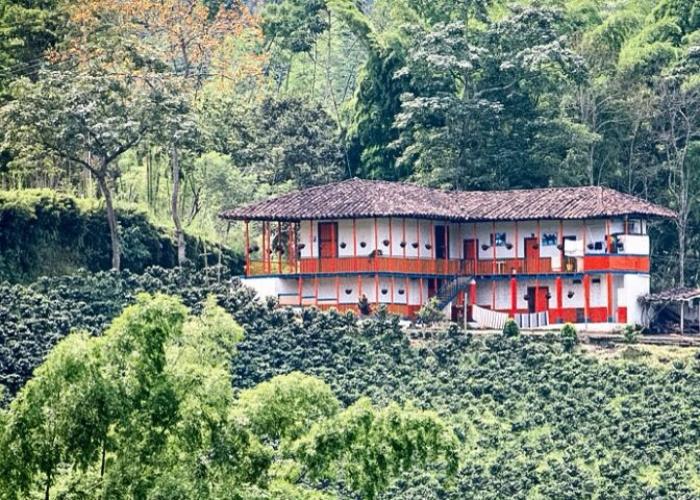 Café, un ingrediente esencial para la paz en Colombia