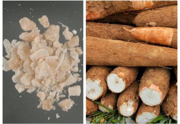 $1.2 millones por kilo de base de coca VS $1.200 por kilo de yuca