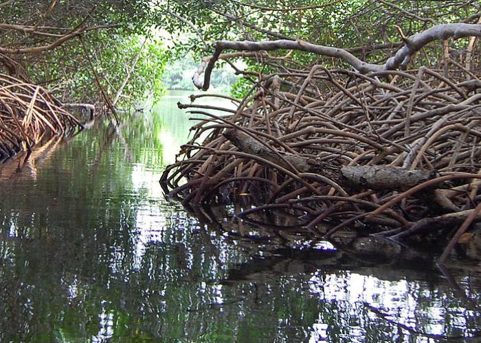 Los manglares sacrificados por construir una avenida en Cartagena
