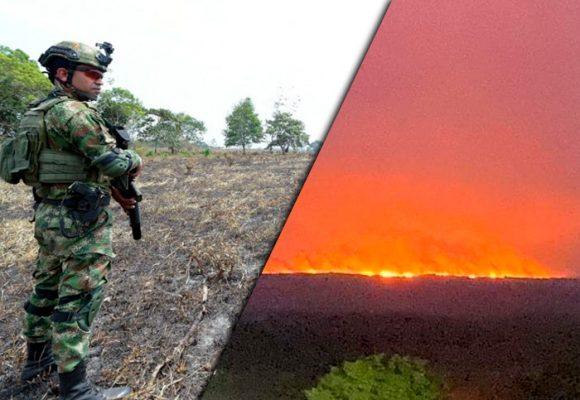 Guerra en La Macarena: coca, ganado y tierra