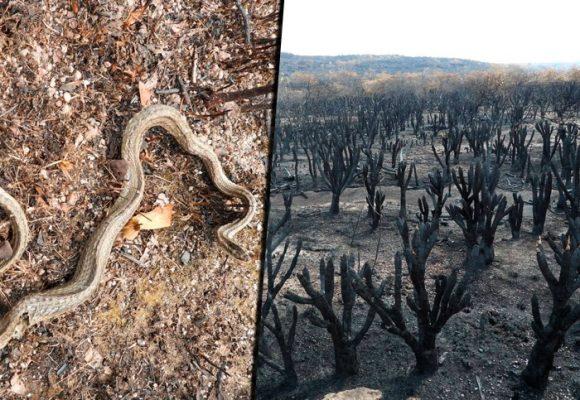 FOTOS: El daño irreparable del incendio en La Macarena