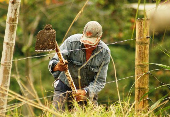 Es hora de que la agricultura sea motor de desarrollo de la economía nacional
