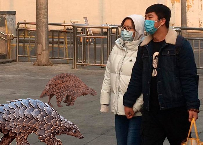 Pangolines, los curiosos mamíferos responsables del Coronavirus