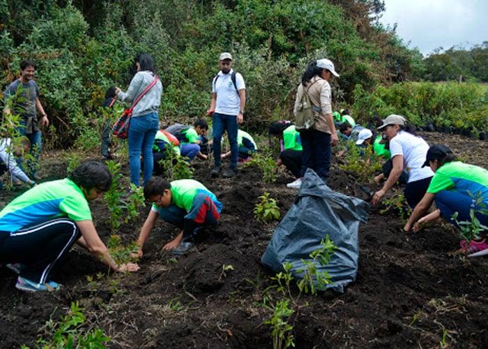 Empresas privadas se la juegan por la reforestación en Colombia