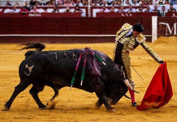 Los toros de lidia son los animales más consentidos