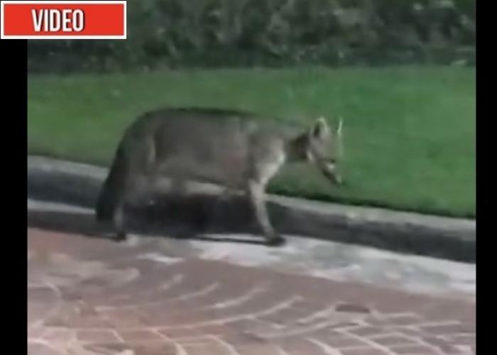 VIDEOS: En Colombia los animales también se toman las ciudades