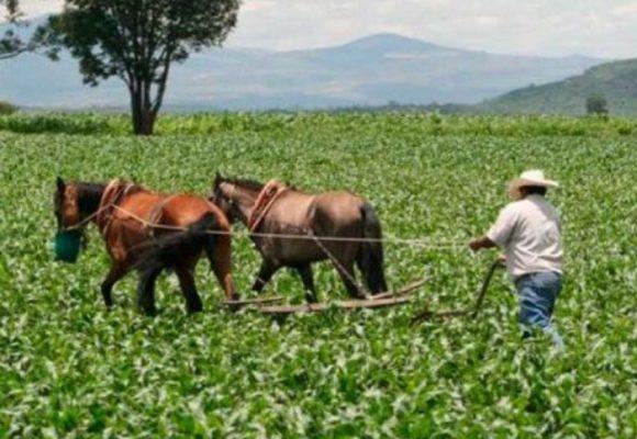 """""""El 75% de los campesinos no tiene forma de acceder a créditos"""""""