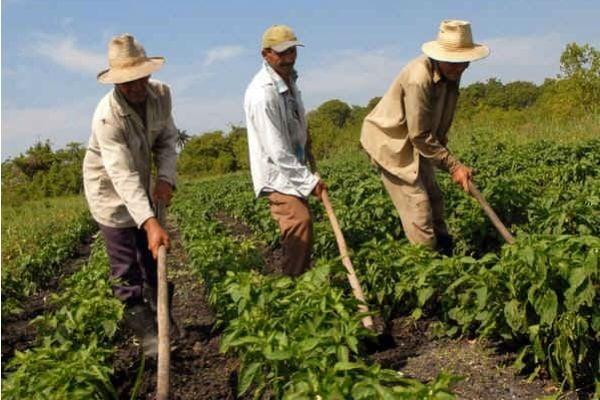 Campesinos en riesgo de Coronavirus por culpa de los irresponsables que se fueron de puente