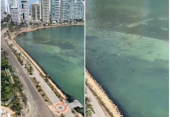 El agua cristalina de Cartagena en época de Coronavirus [VIDEO]