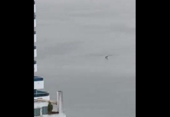 VIDEO: Delfines en la Bahía de Cartagena luego del toque de queda