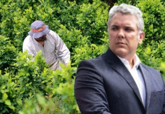 El látigo de Trump: la coca crece en Colombia