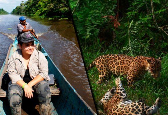 Una científica aprendiendo de jaguares en medio de las balas