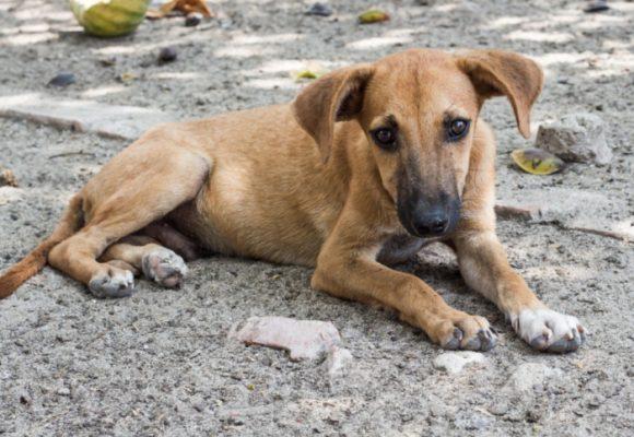 Amores perros: almas sin hogar que terminan envenenadas