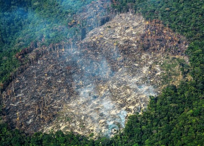 La agonía de la tierra en medio de la pandemia del COVID-19