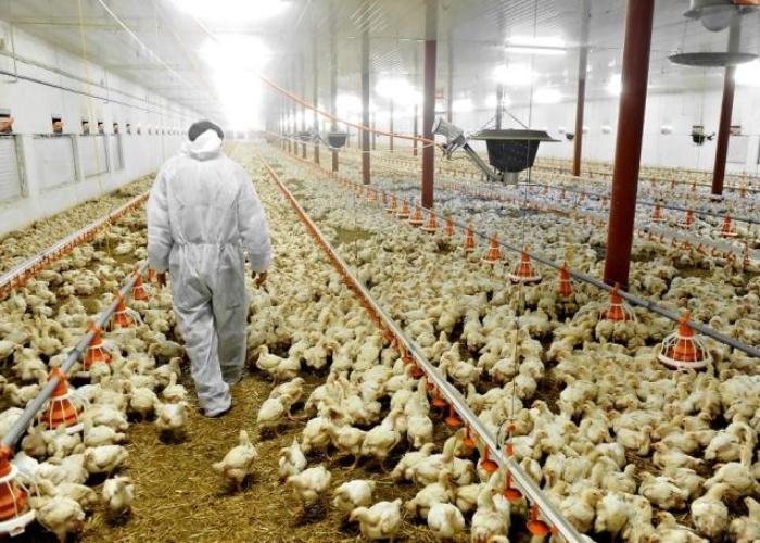 ¿Llegó la hora se subsidiar la producción de alimento?