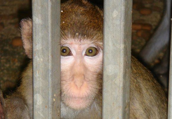Lo cruel y contraproducente de probar la vacuna del COVID-19 en animales