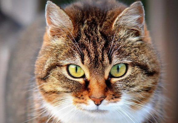 Le hacen una fiesta a un gato y se infectan de Covid 15 personas