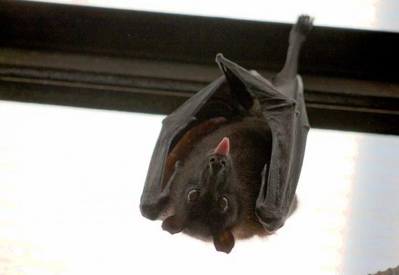 Desayuno sin murciélago