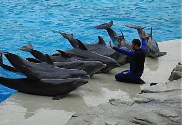 ¿A qué se atienen los delfines en cautiverio?