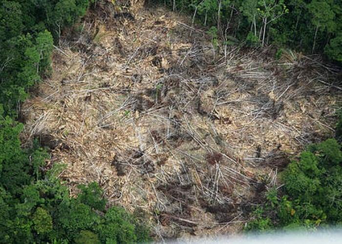 Seis claves para entender la deforestación en Colombia