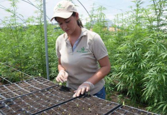 ¿Es hora de legalizar la marihuana?