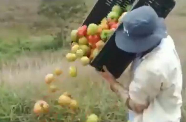 Campesinos botan alimentos porque Duque no les compró la cosecha