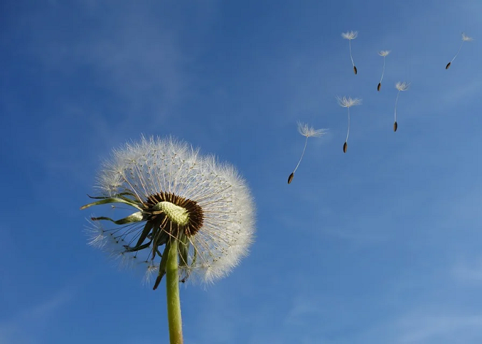 En tiempos difíciles, las respuestas están en el viento