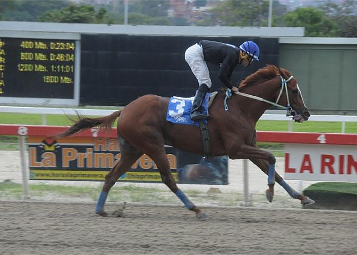 Se robaron, descuartizaron y se comieron al caballo de carreras más famoso de Venezuela