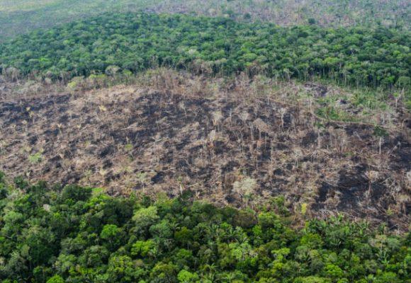 ¿Y los derechos de la Amazonia?