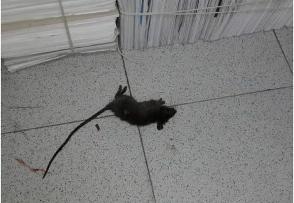 Ratas y suciedad: así está el Consejo Superior de Bogotá