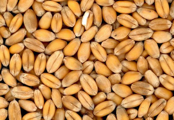 Sin semillas no habrá comida
