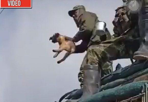 Militares colombianos matan a un perrito para divertirse. VIDEO