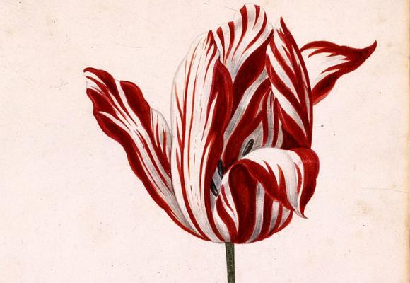 Lecciones de la tulipomanía