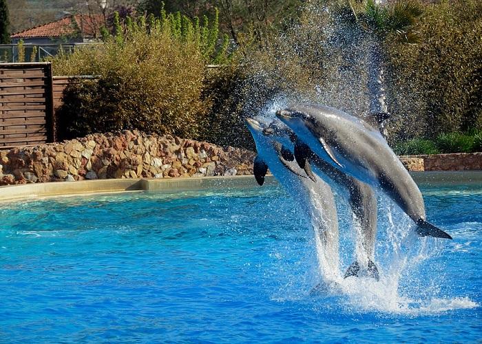 La mentira que se esconde detrás de la sonrisa de los delfines