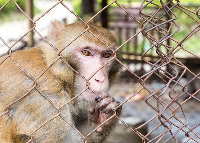 Frívola ciencia: el problema de usar animales en experimentos