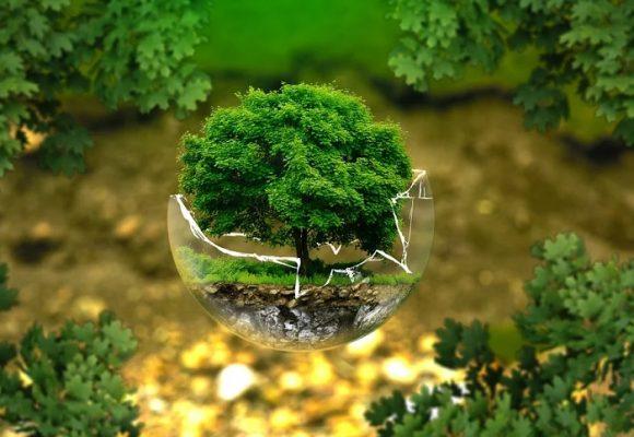 ¿Cuándo nos dignaremos a cuidar el planeta?