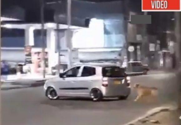 VIDEO: El desgarrador momento en que hombre abandona su perro en Bogotá