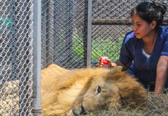 A la Fiscalía le importó más el caso del León Jupiter que el de los jóvenes masacrados en Cali
