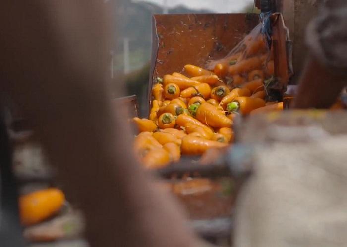 La ardua tarea de garantizar un abastecimiento saludable en tiempos de pandemia