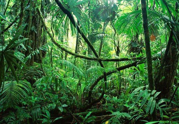 Más que un país, Colombia parece una jungla