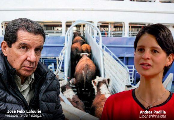 La aguerrida ambientalista que quiere frenar la exportación de ganado en pie