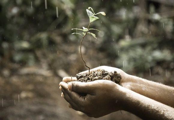 Somos parte del tronco del árbol de la vida
